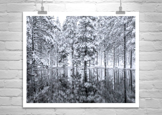 Black and White, Forest Photo, Winter Art, Water Reflection, Bird in Flight, Tree Art, Nature Photography, Snowy Forest, Winter Photography