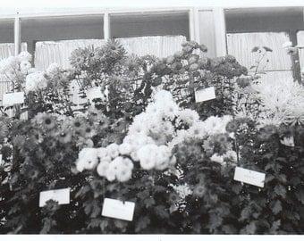 Original Vintage Photograph Potted Plants Flowers 1950s