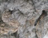 Raw Coated  dark gray Cheviot-Merino Fleece, super soft wool with crimp - Fresh from the flock
