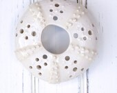small urchin wall hanging, urchin tabletop sculpture, white
