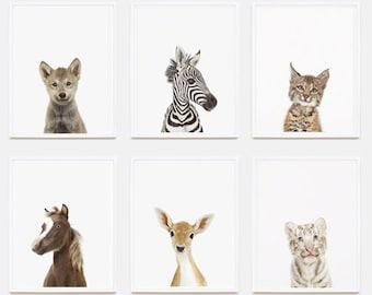 Baby Animal Nursery Art Print: Baby White Tiger Little Darling.