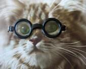 Antique cat photo postcard, cat with glasses photo postcard, antique novelty photo postcard, vintage cat photo postcard, antique cat photo