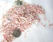 Beach Nautical Pink Apple Blossom Tiny Cup Shells - Tiny Pink Seashells for Jewelry, Weddings- 3x4 Bag