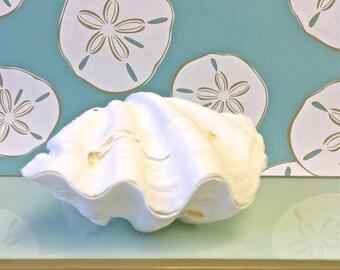 Seashells - Fluted Clam Shell Pair - Squamosa clam shell, shells, seashell, seashells, sea shell, sea shells