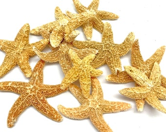 "Starfish - 10 Natural Sugar Starfish 1.5""-2.5"" *Grade B* Beach Decor Star Fish Bulk Beach Wedding Coastal Nautical Real Starfish"