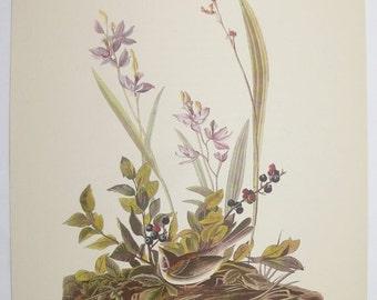 Field Sparrow 1940s Vintage Bird Print, Antique Color Audubon Print, Ornithology Art, Vintage Bird Art Gift for Naturalist, Birdwatcher Gift