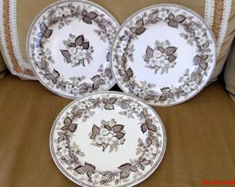 THREE  Vintage Brown Transfer Plates  Wedgwood Staffordshire Transferware Dogwood Flowers