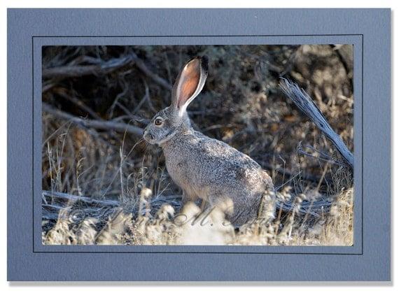 Easter Black Jack Rabbit 74