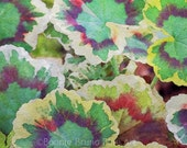 Colorful Geranium Leaves watercolor nature print, autumn colors, ruffly leaves, painted photo, wall art, fall decor, christmas gift ideas