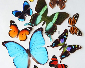 Realistic Paper Butterflies - Cut outs - Set of 10 paper butterfly cut outs - set 1