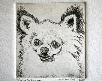 copperplate etching of a 'fluffy' chihuahua