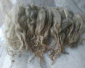 Icelandic Wool Locks / Felting Supply / Fiber Artist / Art yarn