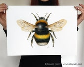 A3 PRINT 'White-tailed Bumblebee'