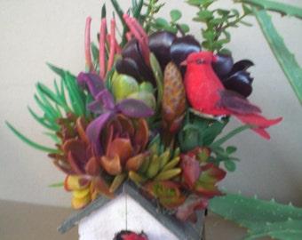 Succulent Plants Birdhouse Color Explosion arrangement