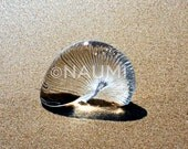 """Glass shell on wet send. 8 x 10"""" Fine Art Photography Archival Pigment Print - contest winner magical nature image of happiness and clarity"""
