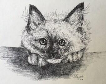 Ragdoll Kitten - Original Pen Drawing - 8x8