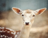Deer Photography, Picture of Deer, Animal Photography, Nursery Decor, Baby Deer Decor, Nature Photography, Cute Beige Blue Baby's Room Art.