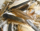"Feathers 100+ Cleaned Assorted Cruelty Free Wing Tail 1""to 6"" Free Range Natural NO DYE Cleaned Disinfected  Nice Quality"