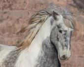 Theodore - Fine Art Wild Horse Photograph - Wild Horse - Adobe Town - Adobe Appys