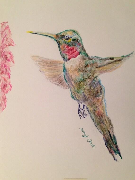 Items similar to Hummingbird drawing - colored pencil ...