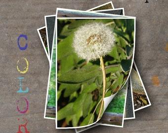 LETTER I Alphabet Photography LETTERS - Color Alphabet Photos