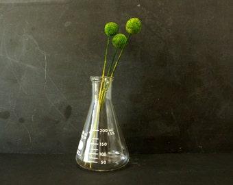 Vintage Erlenmeyer Flask, Pyrex 250ml (c.1980s) - Unique Vases, Halloween Decor, Mad Science Party