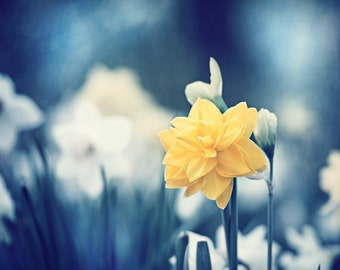 """Blue Yellow Nature Photography - flower photograph yellow floral picture botanical wall art large dark blue print, """"A Moment Like This"""""""