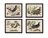 Vintage Bird and Botanical Print Set No.7 - Giclee Canvas Art Prints - Antique Botanical Prints - Wall Art - Prints - Posters - Mark Catesby
