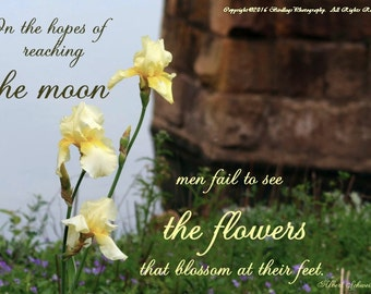 Springing Ahead in Lock and Dam with Yellow Iris with Inspirational Quote - Georgia