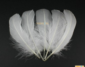 50 Pieces White  Feather 10-15cm (YM6)