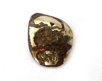 Ammonite with Pyrite Designer Cab Gemstone 34.4x38.3x9.7 mm 141 carats Free Shipping