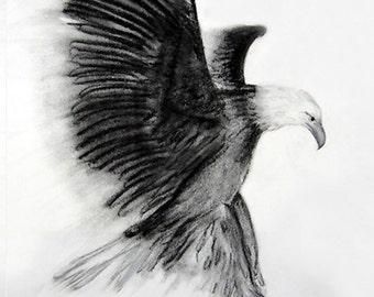 Eagle - Art print of Original Charcoal Drawing - 8x10 Bird Art