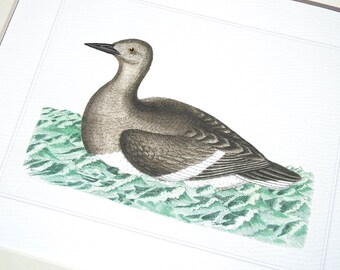 Bird Print 4 of Sea Bird on Blue Green Water Archival Print on Watercolor Paper