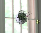 Hanging Planter, Air Plant Holder, Tillandsia Planter.  Round Hanging Planter, White Ceramic Planter, Handmade and ready to ship!