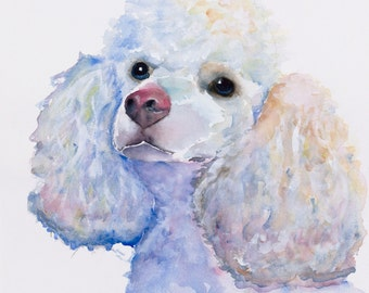 poodle watercolor painting, poodle print, white poodle painting, white poodle print, white poodle canvas, white minature poodle, poodle art,