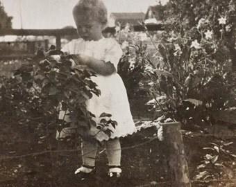 Original Antique Photograph Picking Leaves