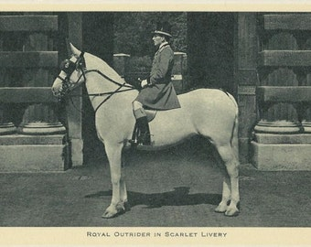 Outrider in Livery - Antique 1910s Tuck Royal Ceremonial Equestrian on Grey Horse