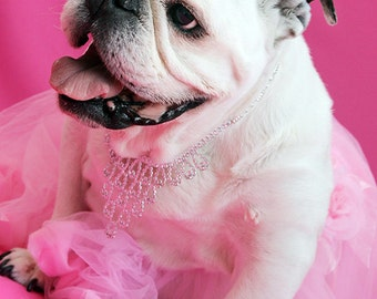 DIVA IN PINK Piper The Painting Bulldog, Dog Photo For A Good Cause, Special Needs English Bulldog, Dog In Tutu and Party Necklace - 5x7