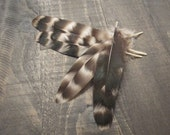 4 Rooster Wing Feathers ~ Cruelty Free **Use Coupon Code FEATHERS20 and save 20% on all Feathers**