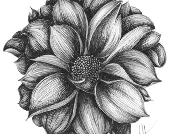 Dahlia - 11x14 Print