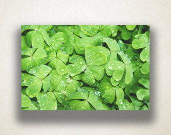 Clover Plant Canvas Art, Clovers Wall Art, Plants Canvas Print, Clover Close Up Wall Art, Photograph, Canvas Print, Home Art, Wall Art