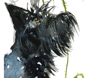 Scottie Dog Art Print Scottish Terrier 'Poppies' #28