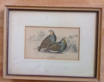 Partridge bird print engraving by William Lizar for Jardine's Naturalists library