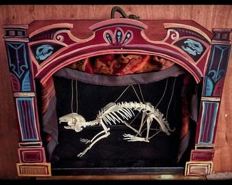Articulated Real Bone Rabbit Skeleton Marionette