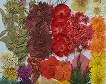 Mixed Multiple Pressed flowers, Mini Rose, Daisy, Larkspur, Queen Anne's Lace real pressed dried flowers