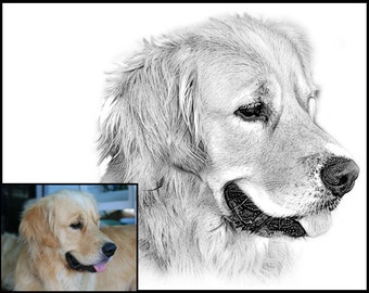 Golden Retriever Portrait - Custom portrait -  Digital Sketch - sketch from photo - custom pet sketch - digital sketch portrait -dog art