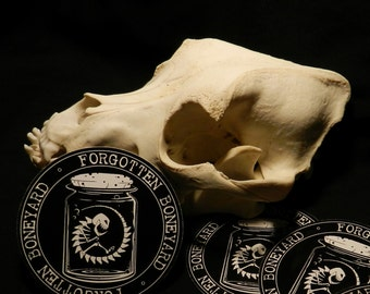Forgotten Boneyard Stickers