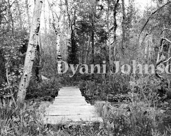 Tiny Bridge in the Woods