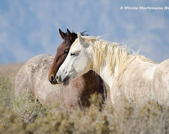 A look into the Future ~ Wild Mustang Horses ~ Wild Horses ~ Equine Art ~ Horse ~ Equine Photography ~ Pferde ~ Home Decor, Onaqui Herd Utah