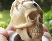 Skull Figurine with Spider Skull with Spider hand carved Antler with Black Onyx gemstone